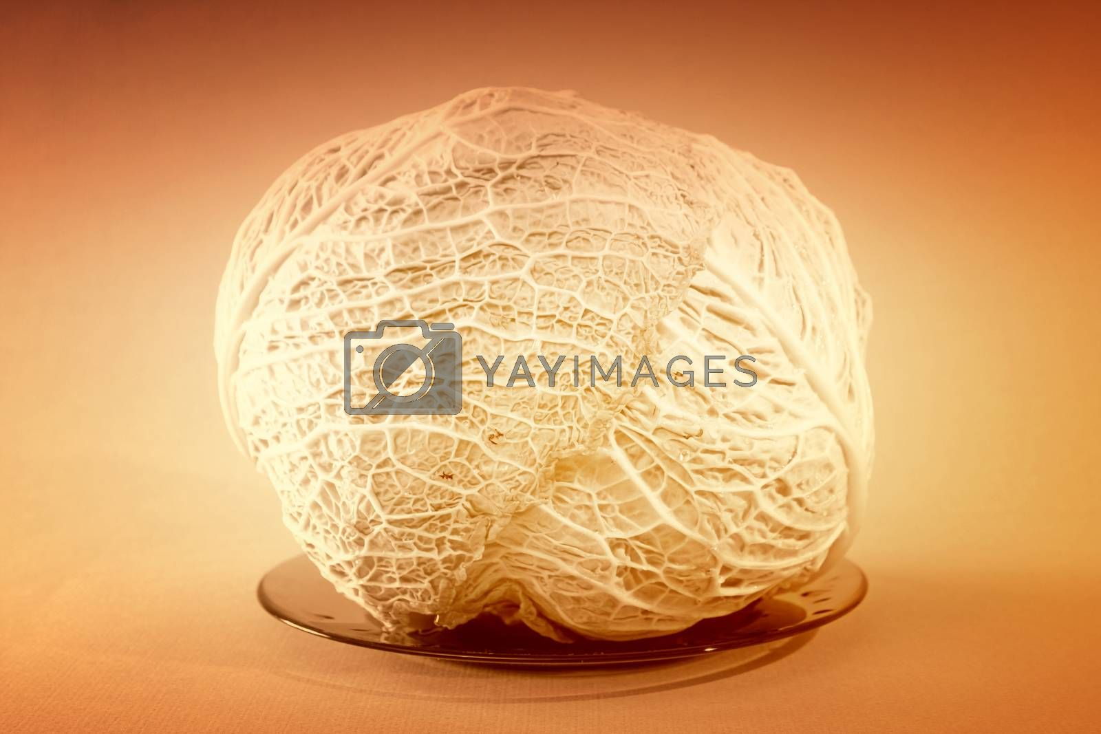 Head of green cabbage vegetable