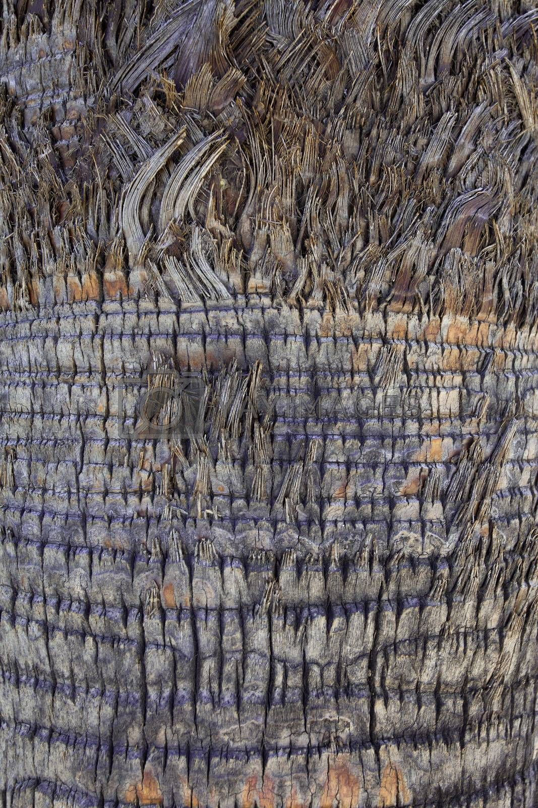 Palm tree trunk background, surface