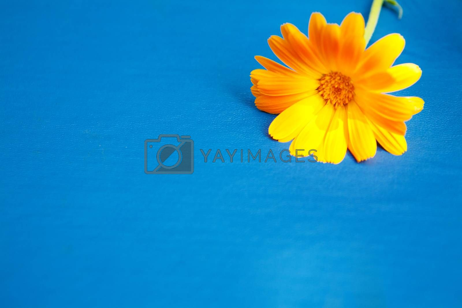 flower on the book on the grass