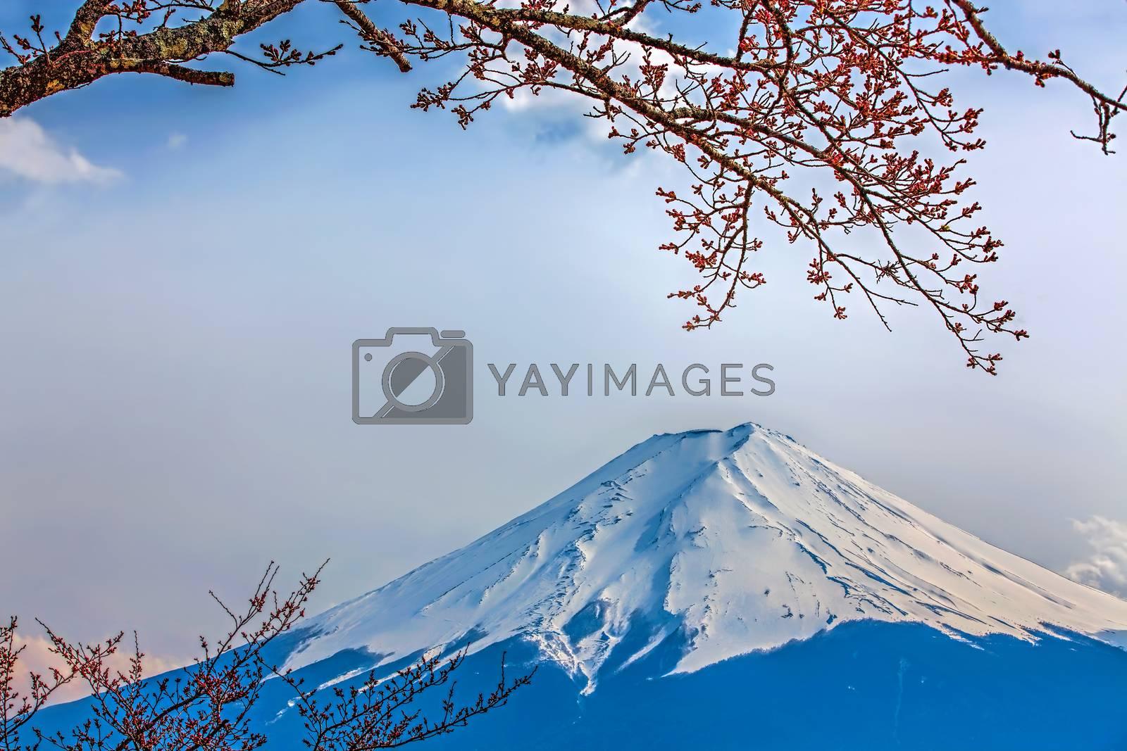Mt Fuji and Cherry Blossoms at lake Kawaguchi