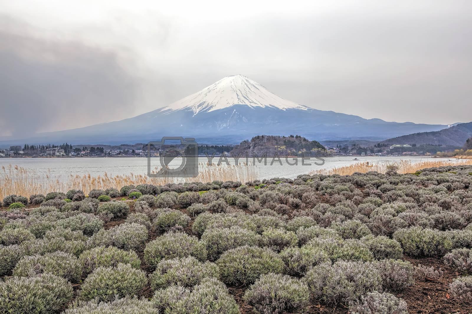 Mt Fuji in the spring seen from lake Kawaguchi