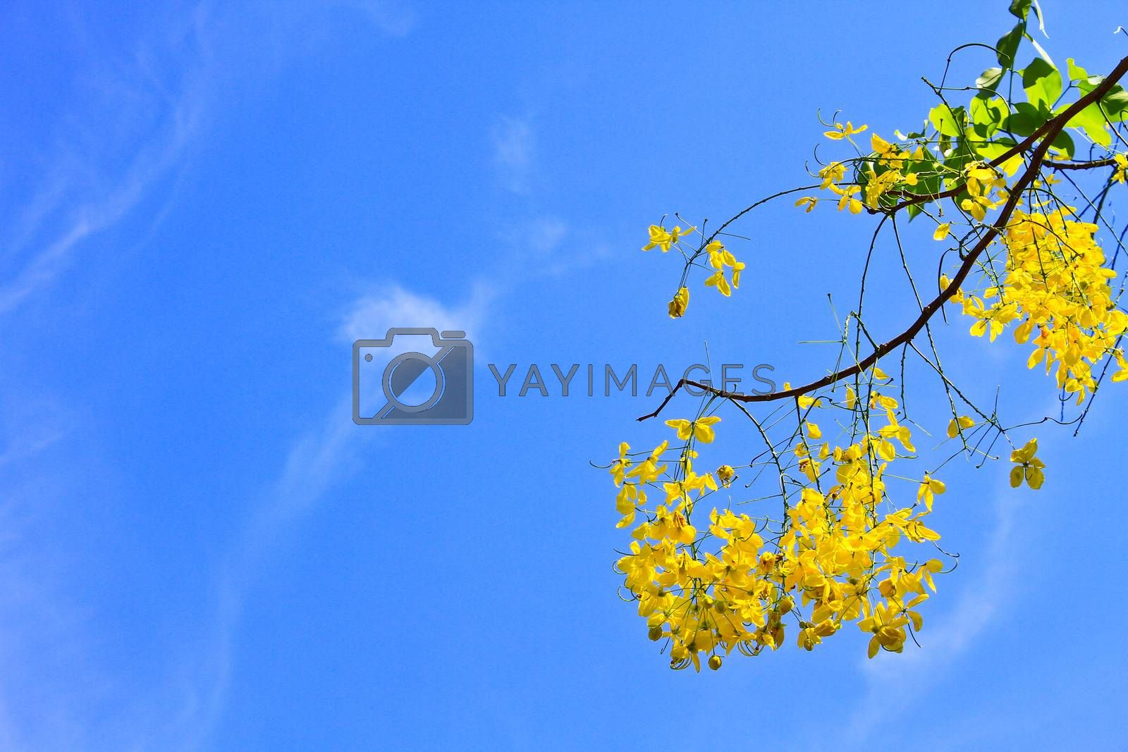 Royalty free image of yellow flower by forest71