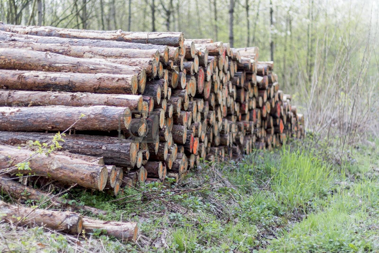 pile of wood in forest ready for transport