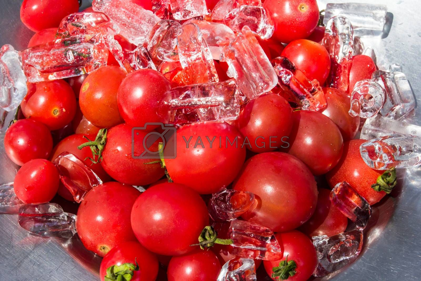 Royalty free image of Queen tomatoes with ice  by kannapon