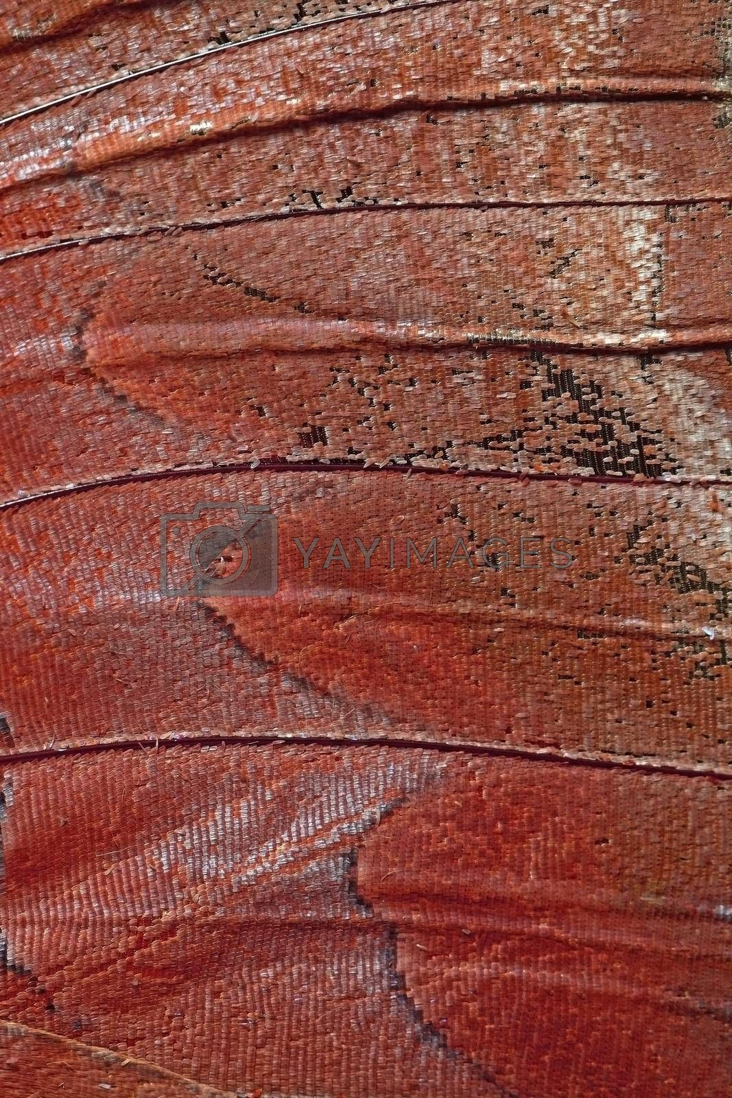 Royalty free image of butterfly wing by panuruangjan