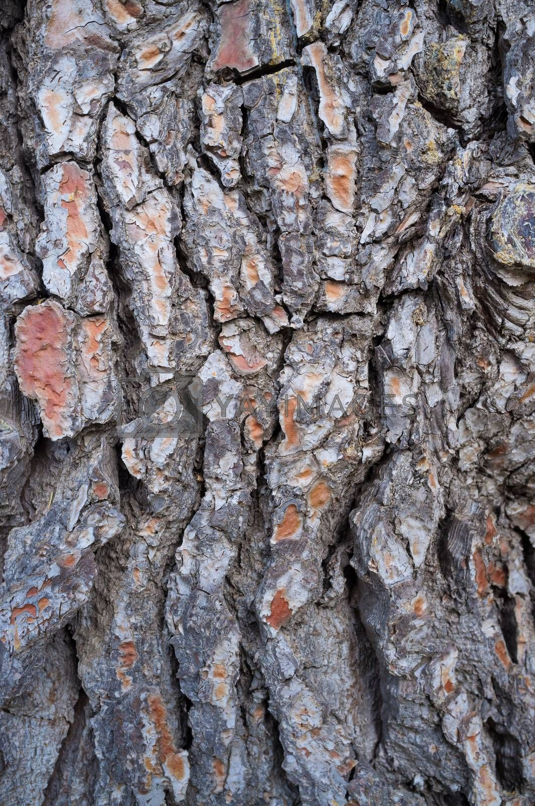 Full frame take of coarse pine tree bark