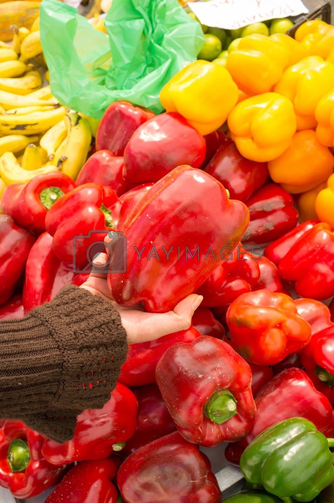 Female hands choosing fresh peppers on a market stall