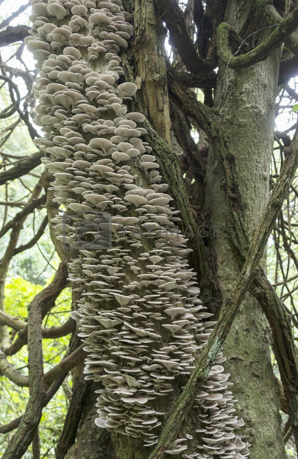 Royalty free image of tree full of mushrooms and fungi by compuinfoto