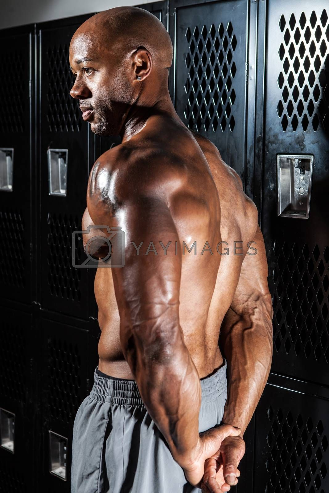 Royalty free image of Muscular Back and Shoulders by graficallyminded