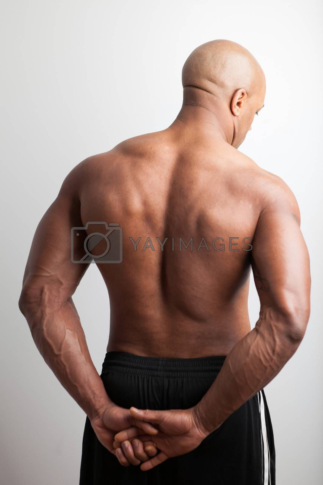 Royalty free image of Muscular Back by graficallyminded