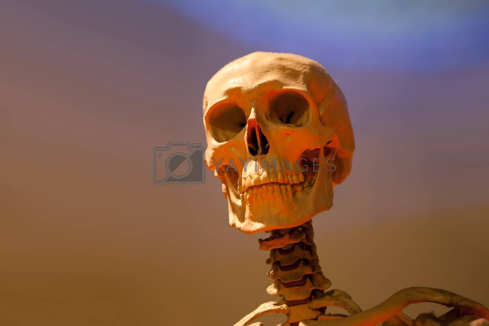 Royalty free image of Scary Skeleton Skull by graficallyminded