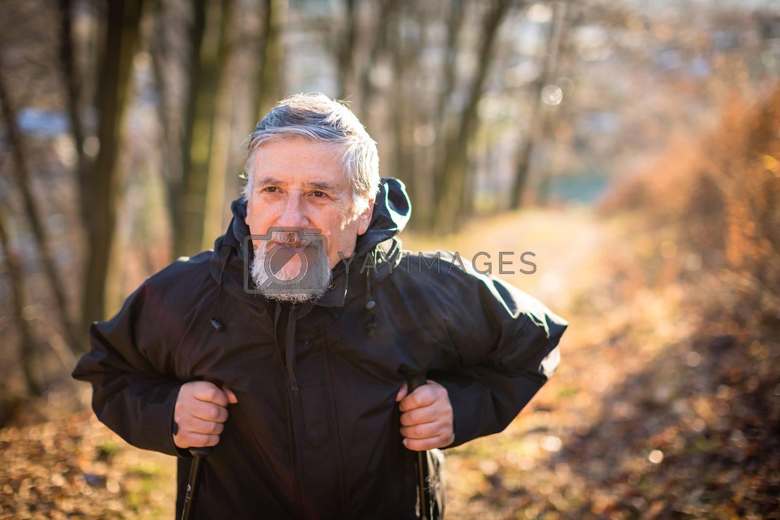 Royalty free image of Senior man nordic walking, enjoying the outdoors by viktor_cap