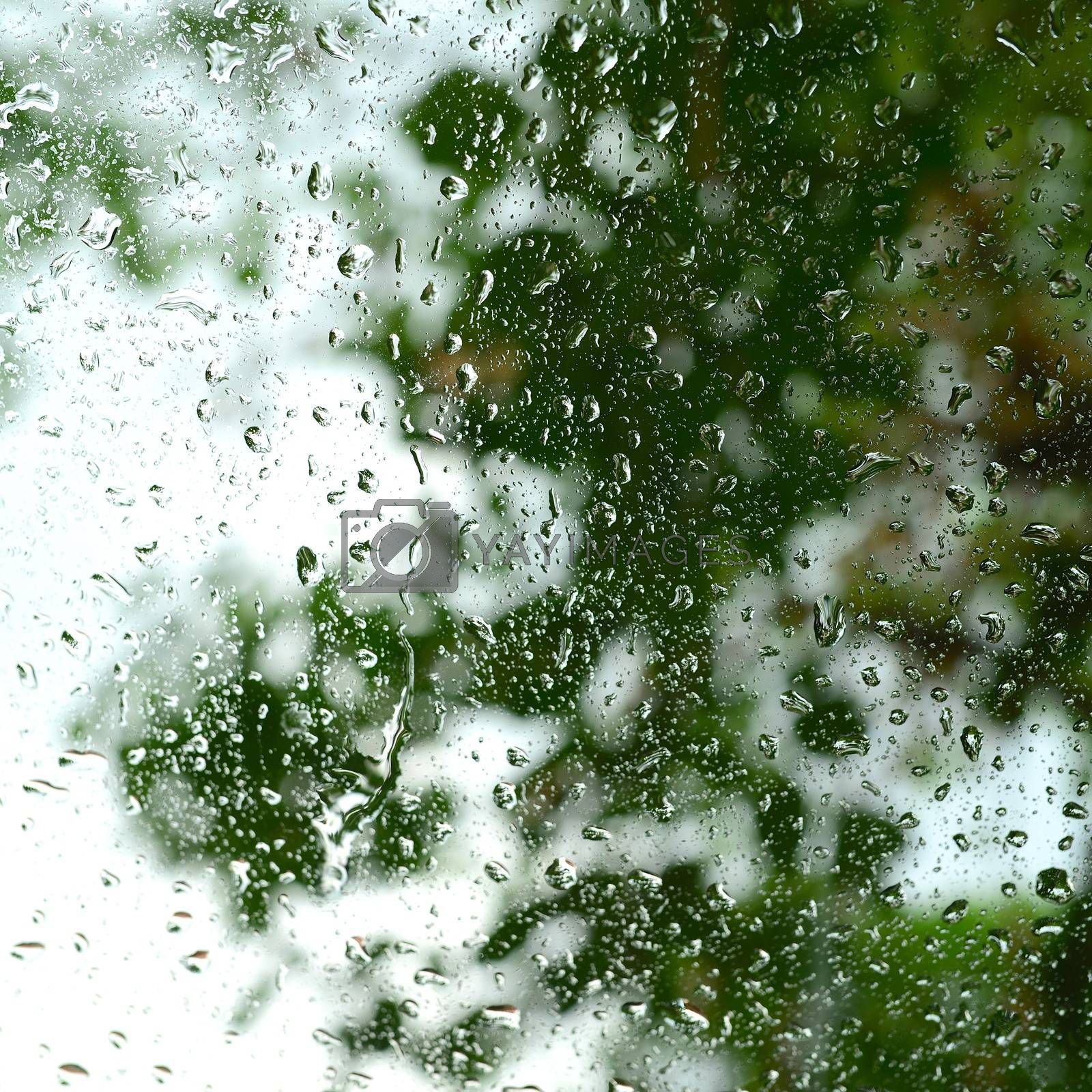 Royalty free image of rain on glass by antpkr