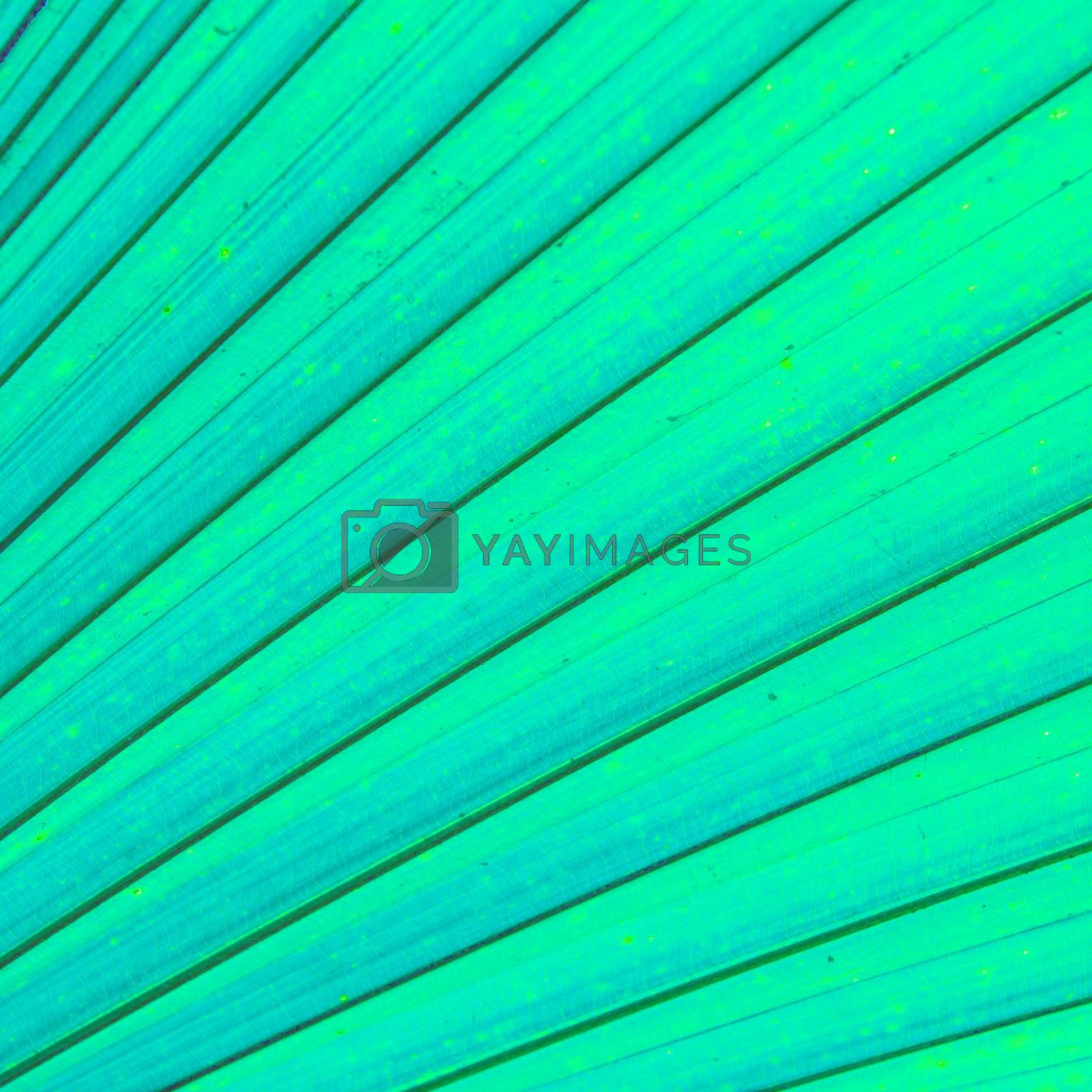 Royalty free image of Green leaves by tuchkay