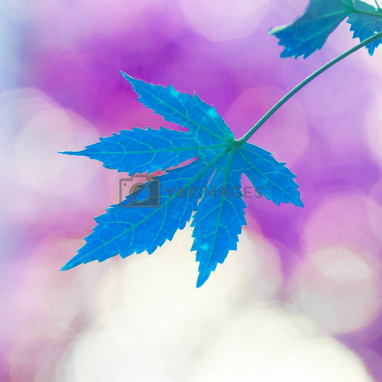 Royalty free image of Red leaves by tuchkay