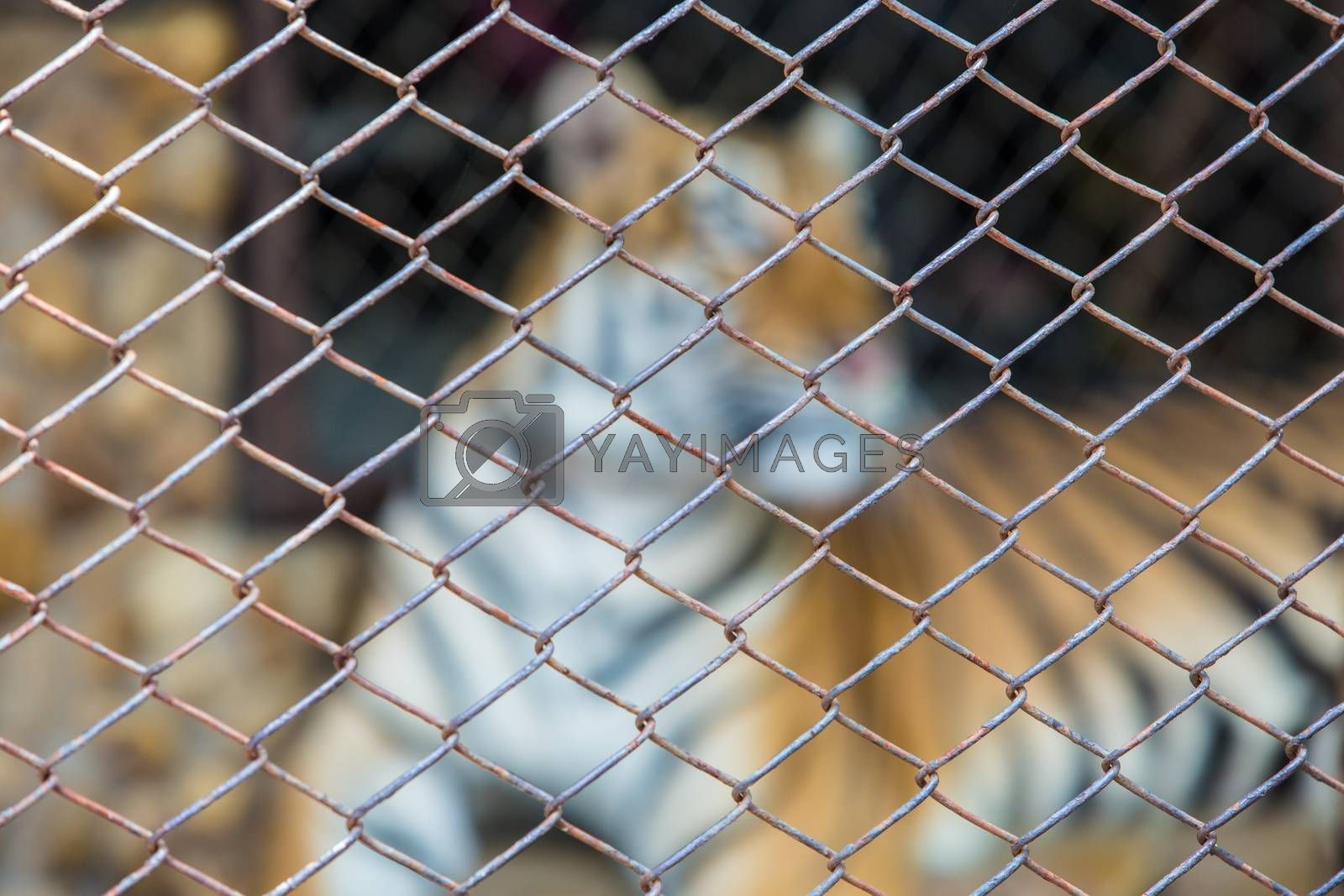 Royalty free image of Cage by tuchkay