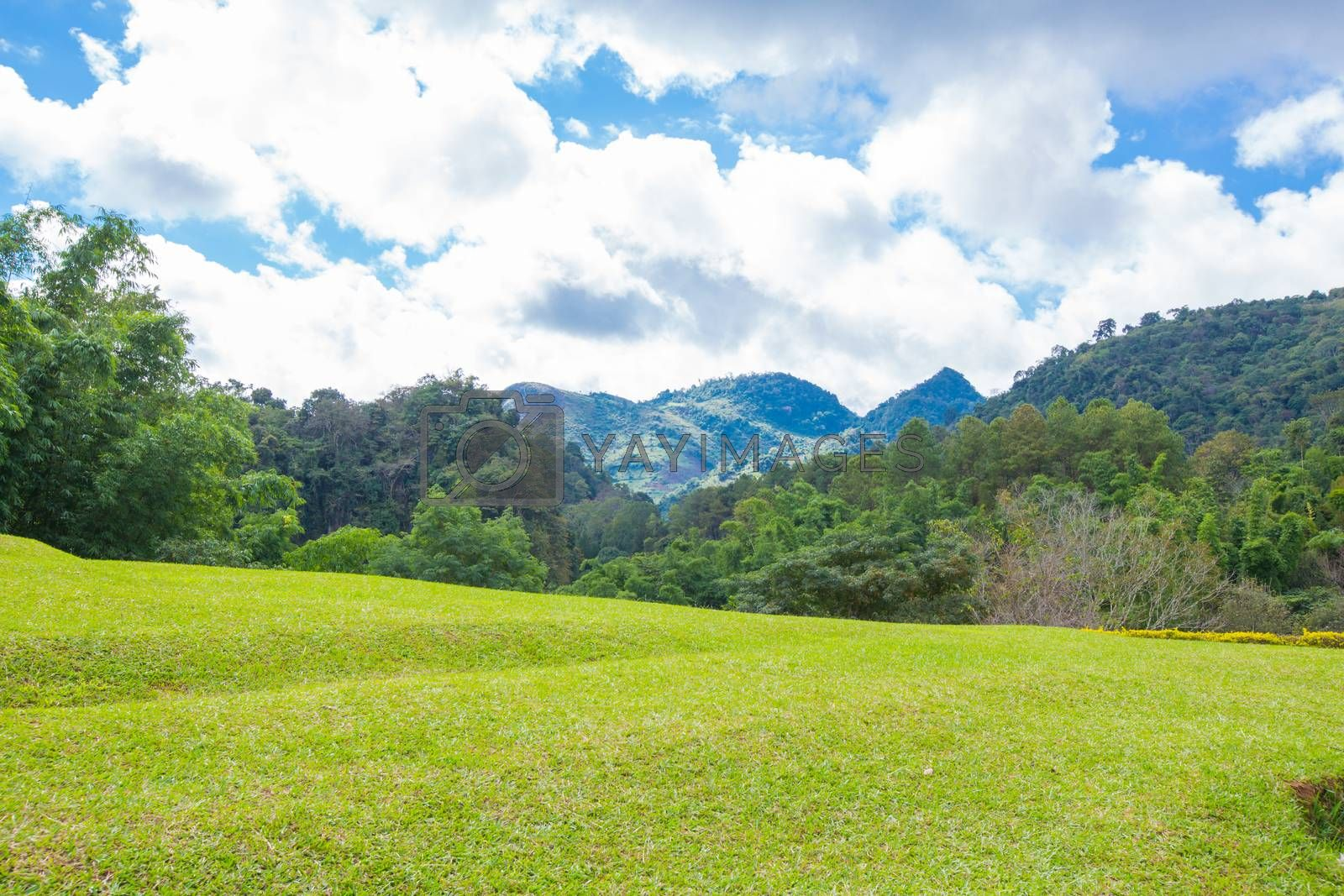 Royalty free image of green hills by tuchkay