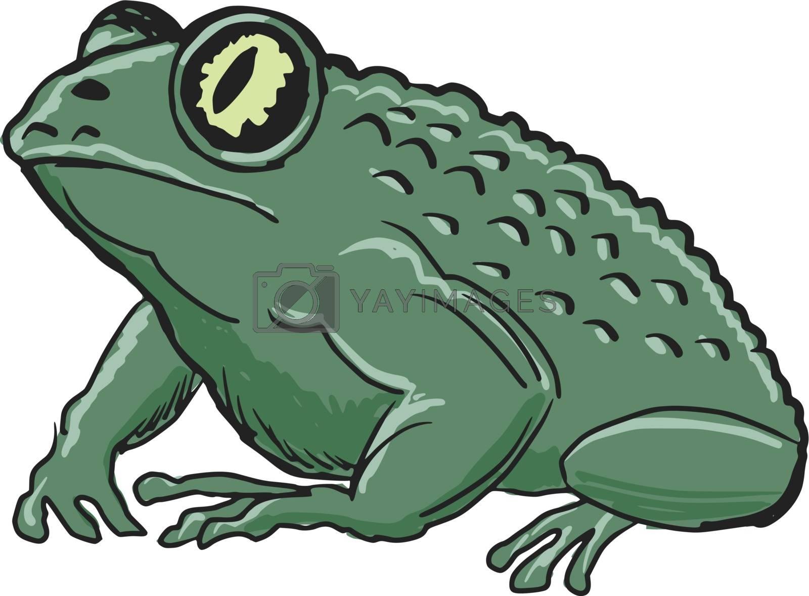 hand drawn, sketch, cartoon illustration of toad