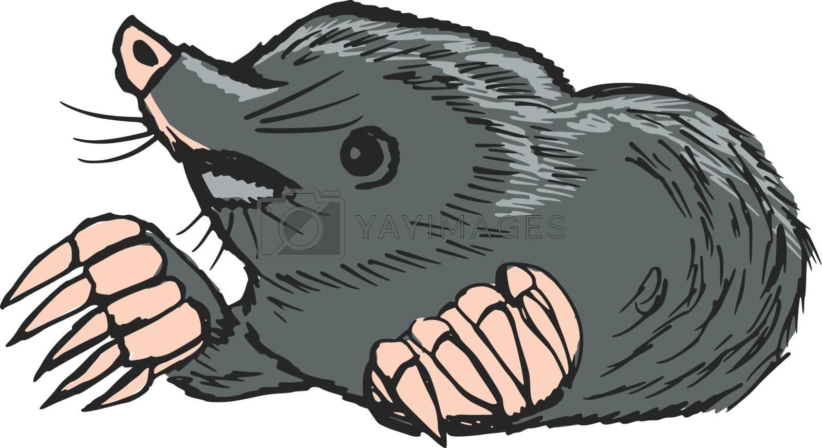 hand drawn, sketch, cartoon illustration of mole