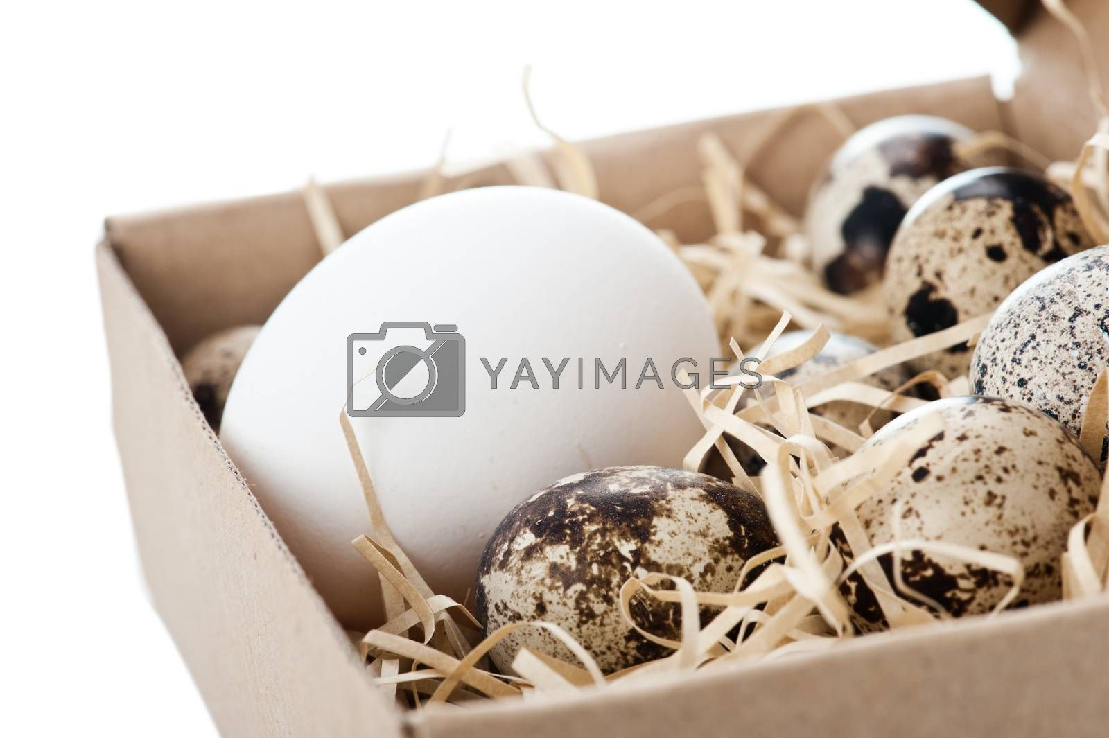 Chicken egg and quail eggs in box