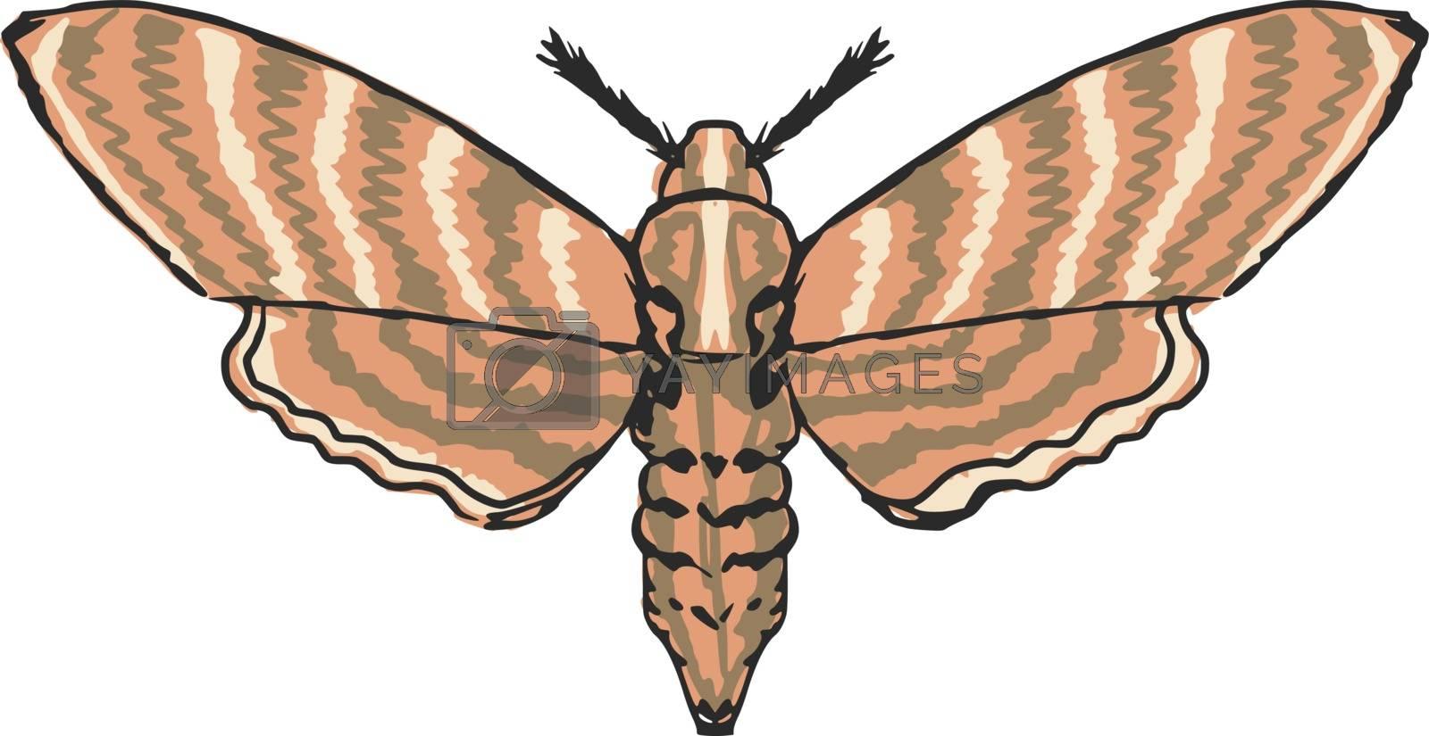 hand drawn, sketch, cartoon illustration of moth