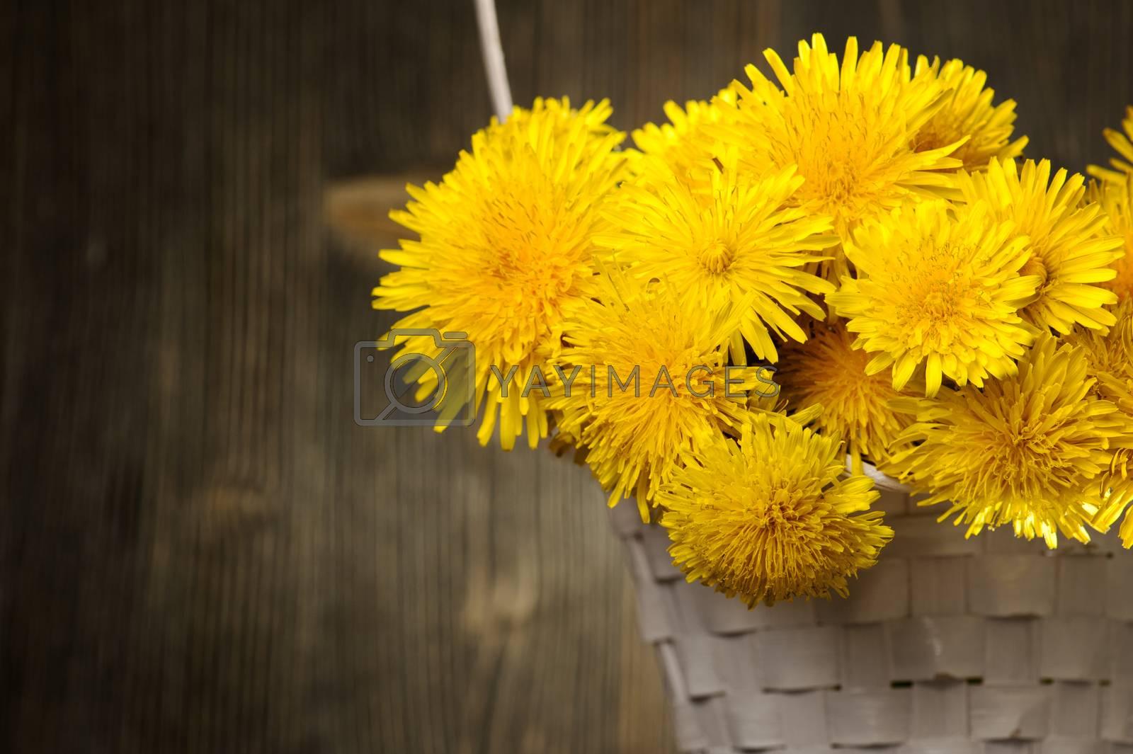 Dandelions in a basket on dark wooden background