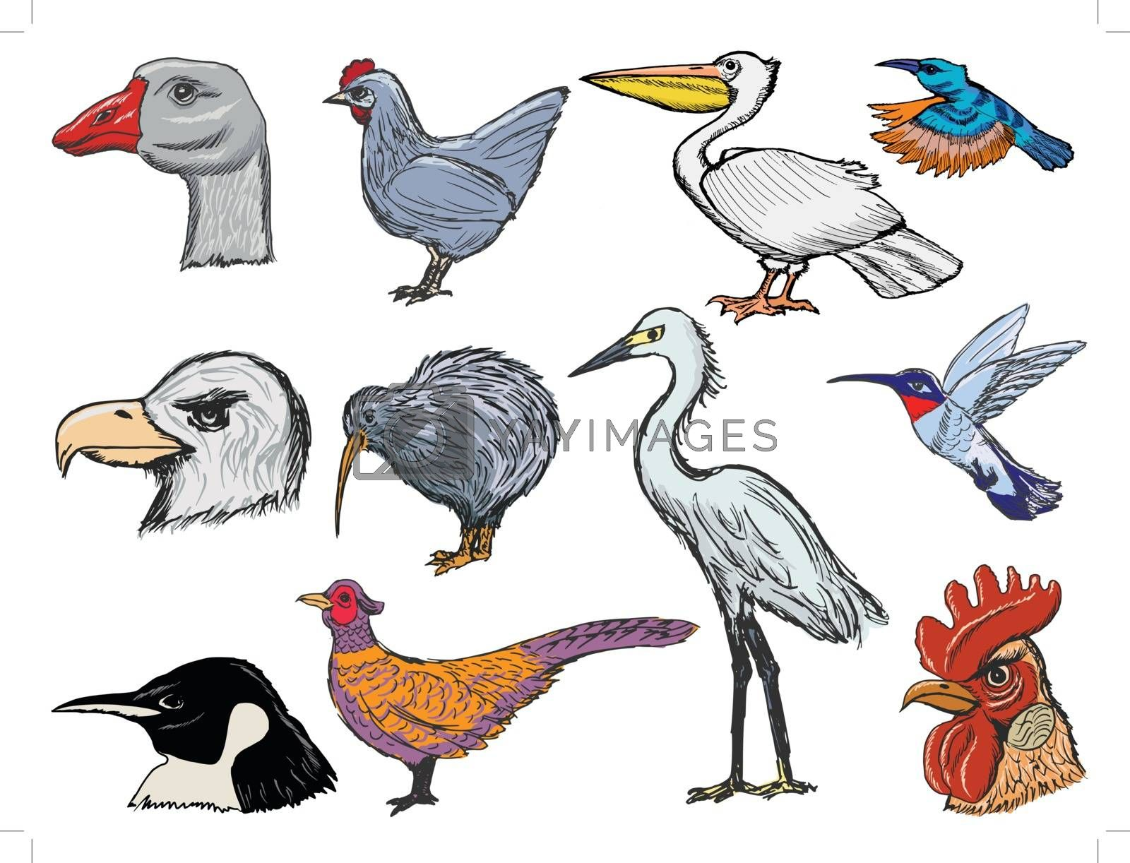 set of sketch illustration of different kinds of birds