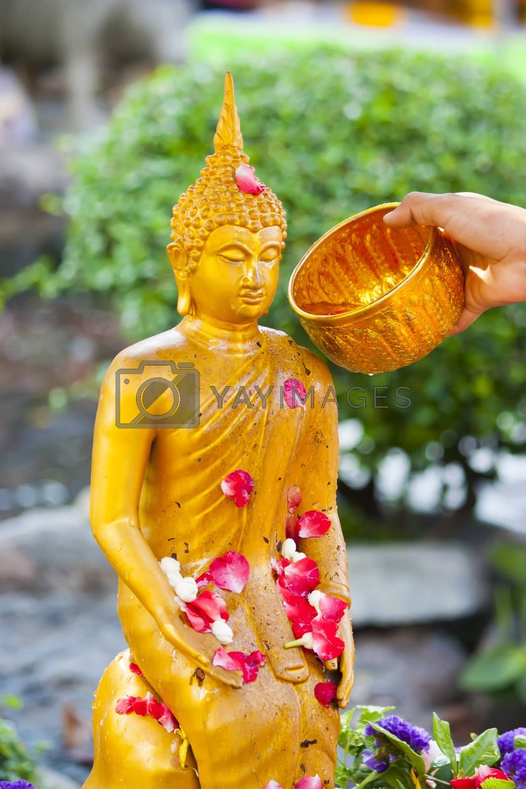 People pouring a water to Buddha statue in Songkran festival tradition of thailand. Photo: Amnarj2006/ yaymicro.com