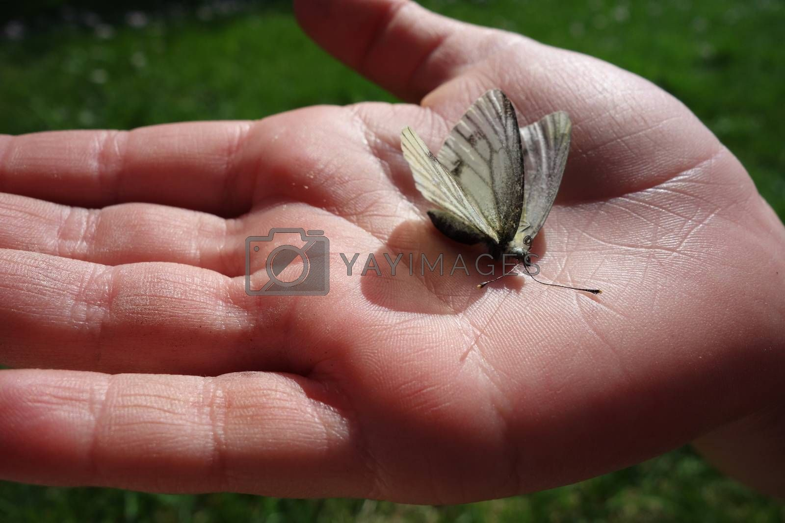 Butterfly in the hand of a child by Therese