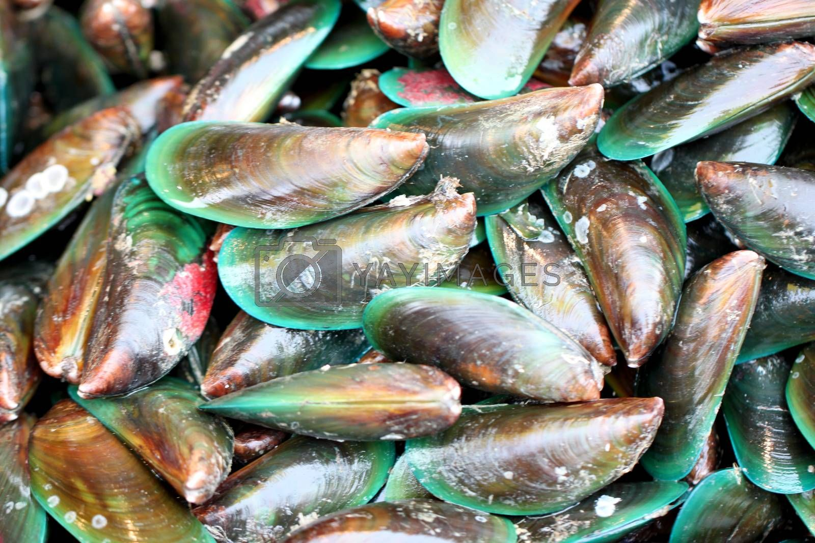 green mussel in seafood market. by PiyaPhoto