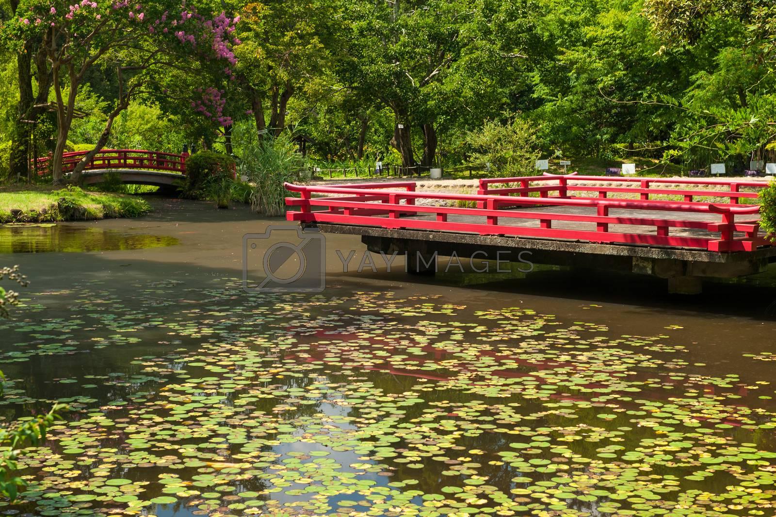 Beautiful Japanese garden by fyletto
