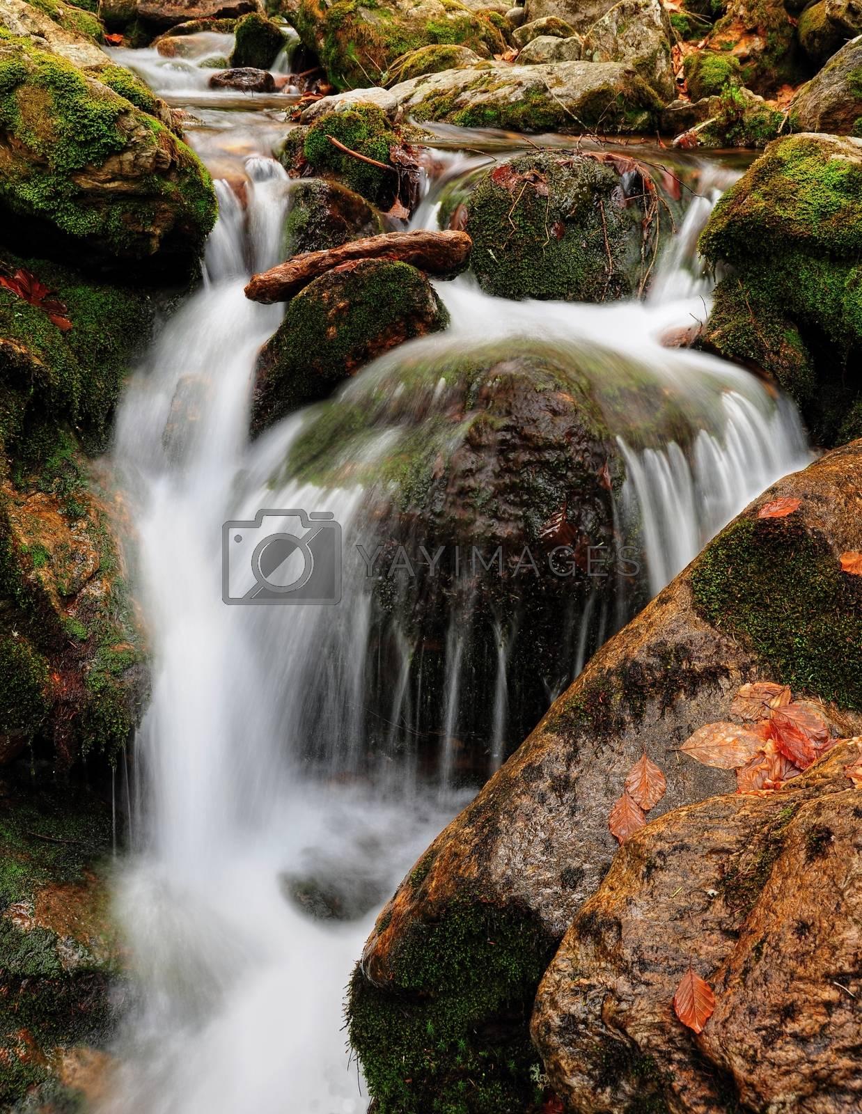 Royalty free image of Spring creek by ondrej83