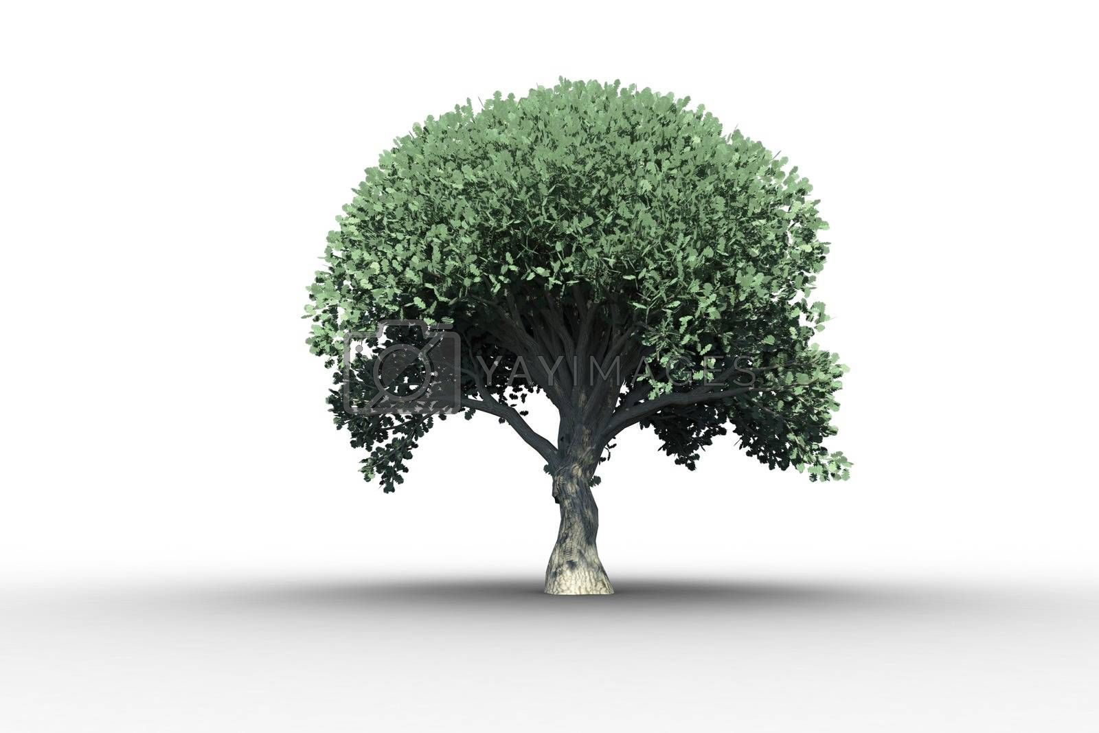 Royalty free image of Tree with green leaves growing by Wavebreakmedia