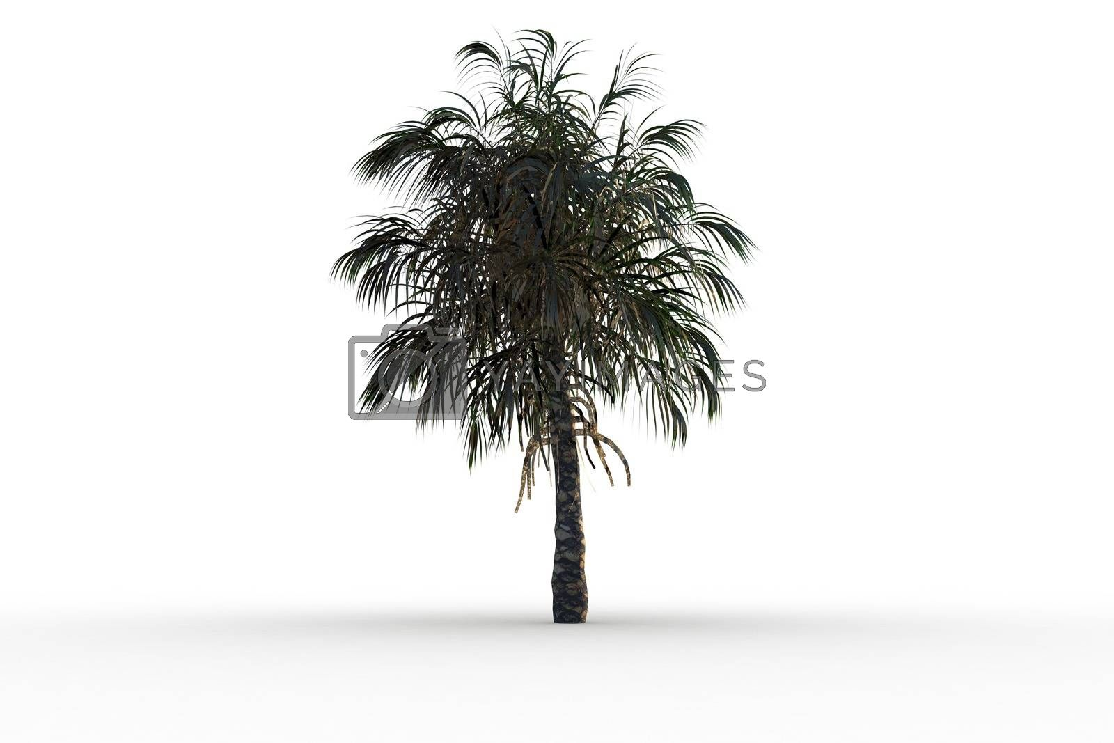 Royalty free image of Tropical palm tree with green foilage by Wavebreakmedia