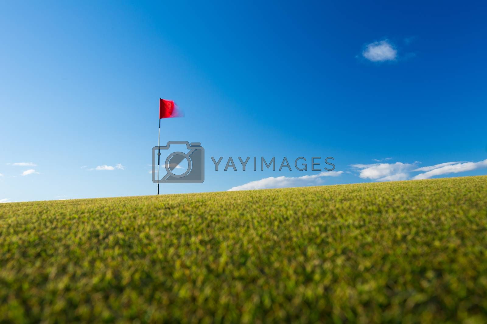 Red golf flag on a golf course, moving in the wind by Viktor Cap