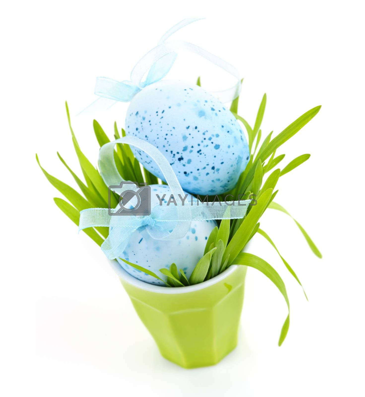 Blue Easter eggs arranged in cup with fresh green grass isolated on white