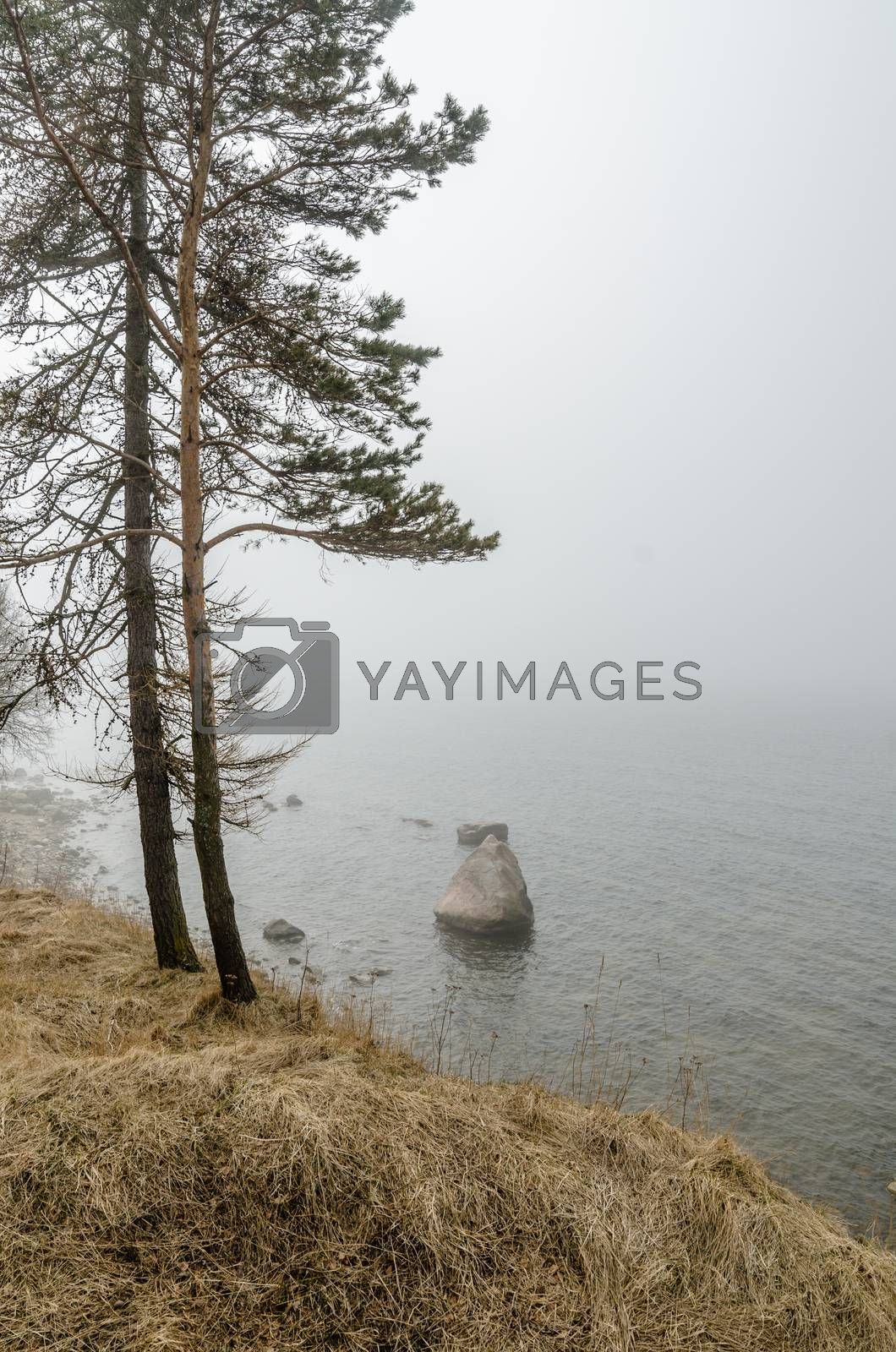 Coast of Baltic sea in a fog