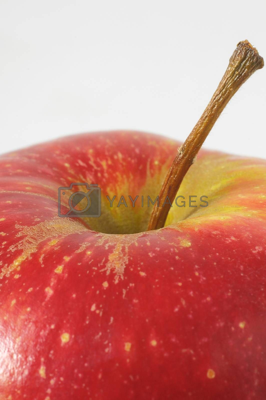 One Juicy Hot Red Apple over a White Background