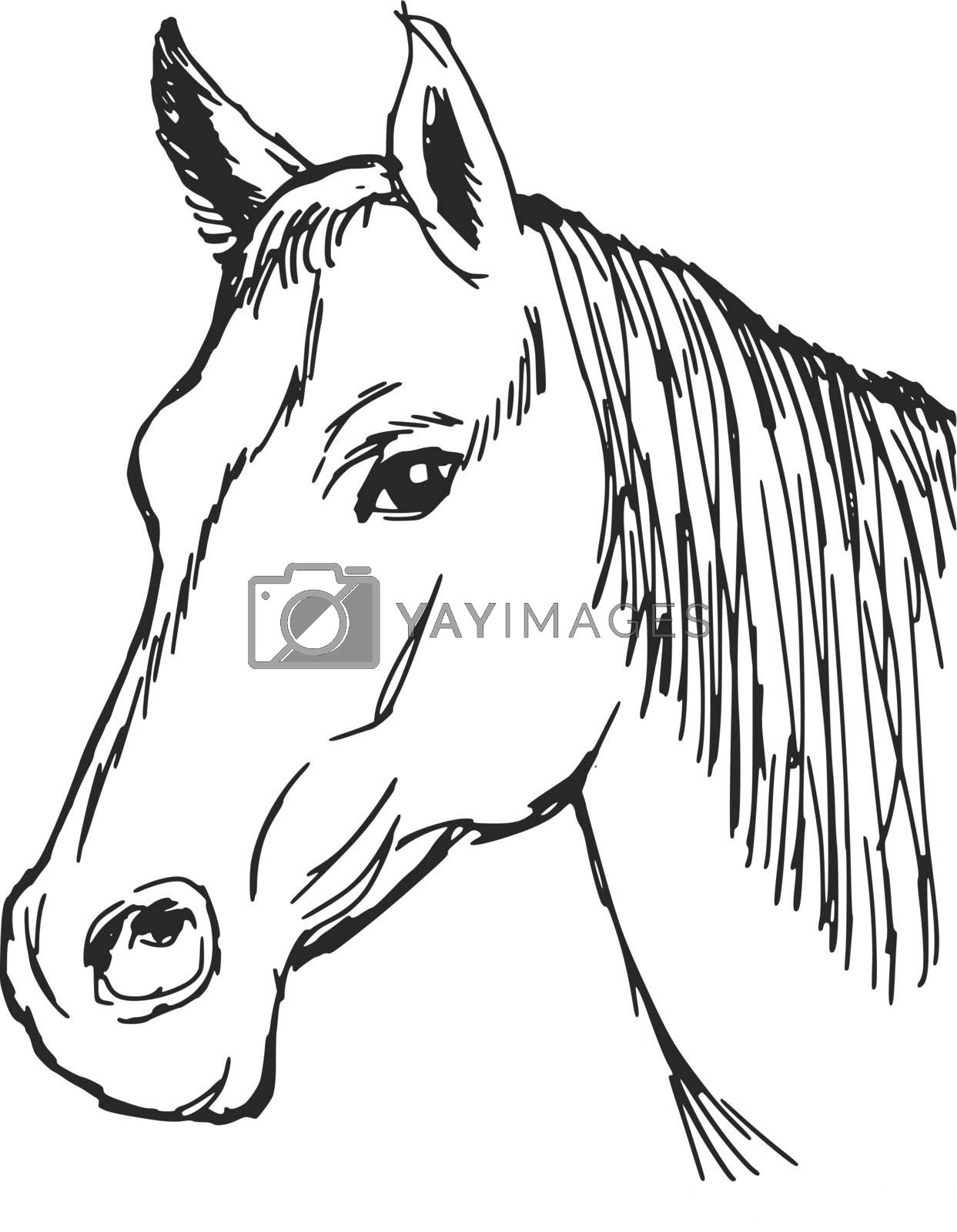 hand drawn, sketch, cartoon illustration of head of horse