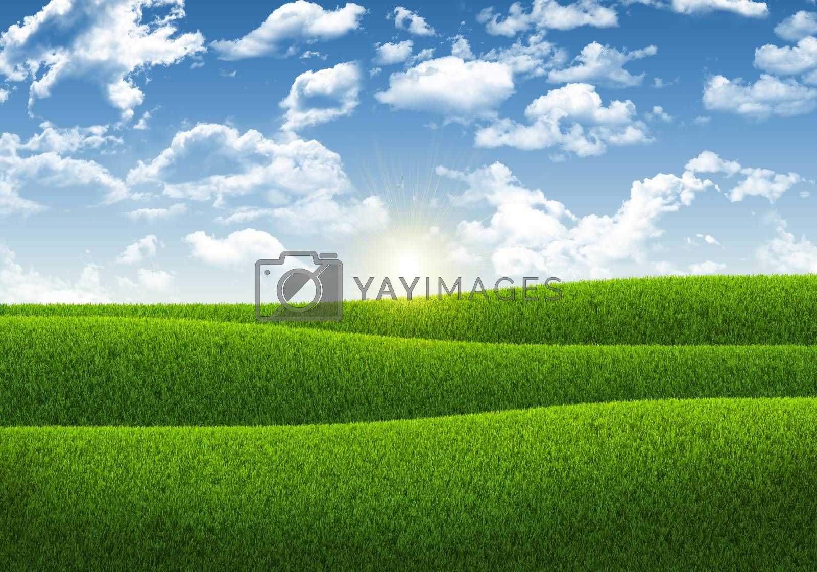 Royalty free image of Blue sky and green grass by cherezoff