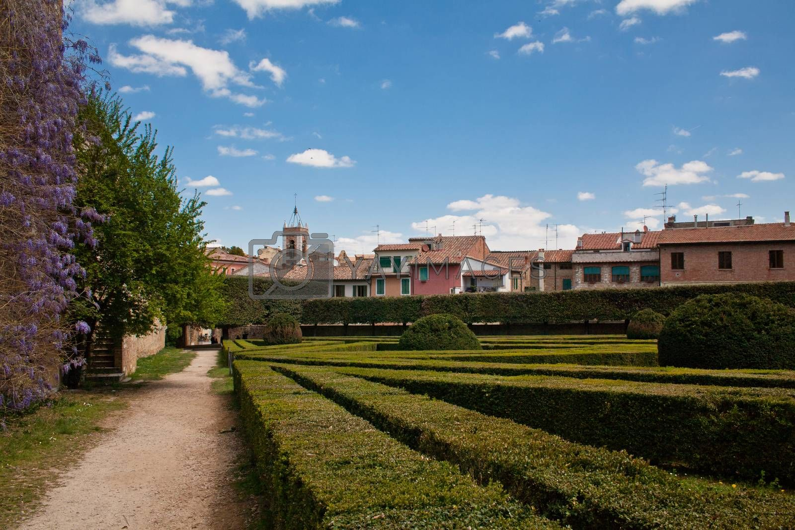 Royalty free image of Formal garden by foaloce