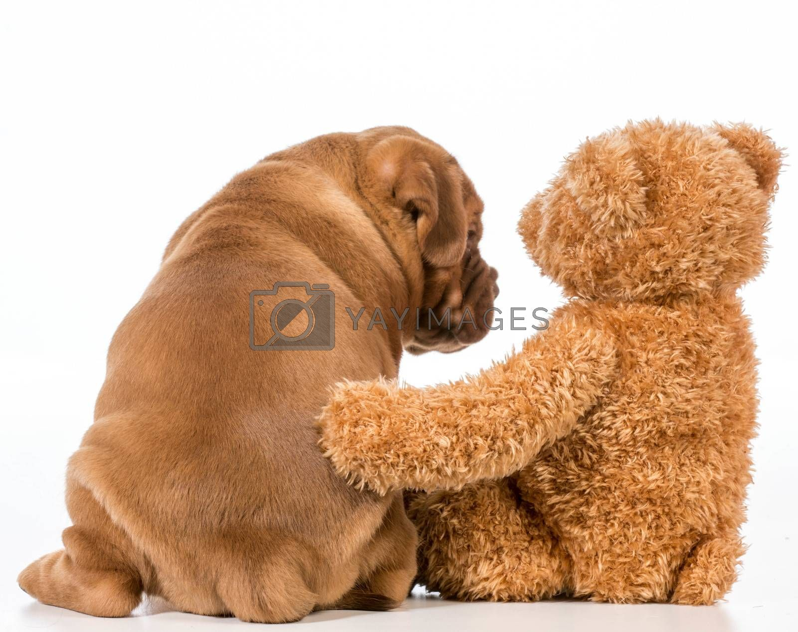 Royalty free image of best friends by willeecole123