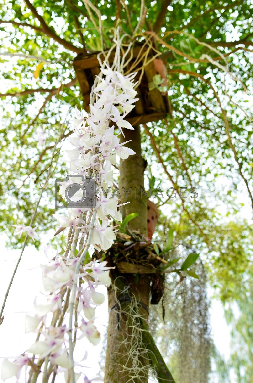 Royalty free image of orchids on trees by jengit