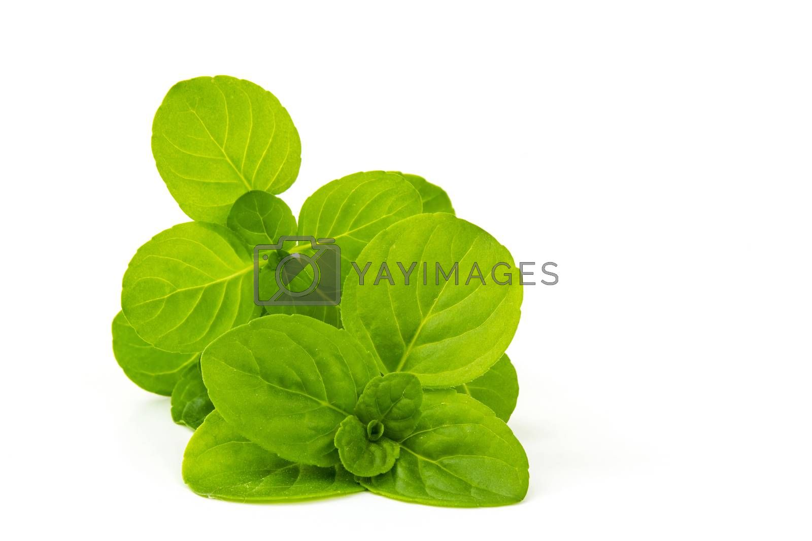 Royalty free image of mint leaves isolated on white background by miradrozdowski