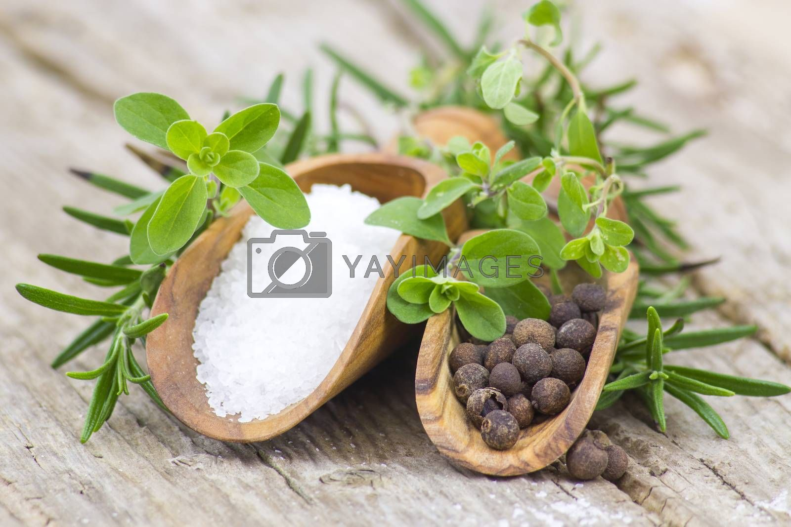 Royalty free image of fresh herbs, salt and pepper by miradrozdowski