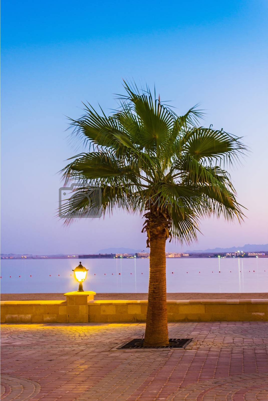 Royalty free image of Promenade with palm trees on the shore of the Red Sea by oleg_zhukov