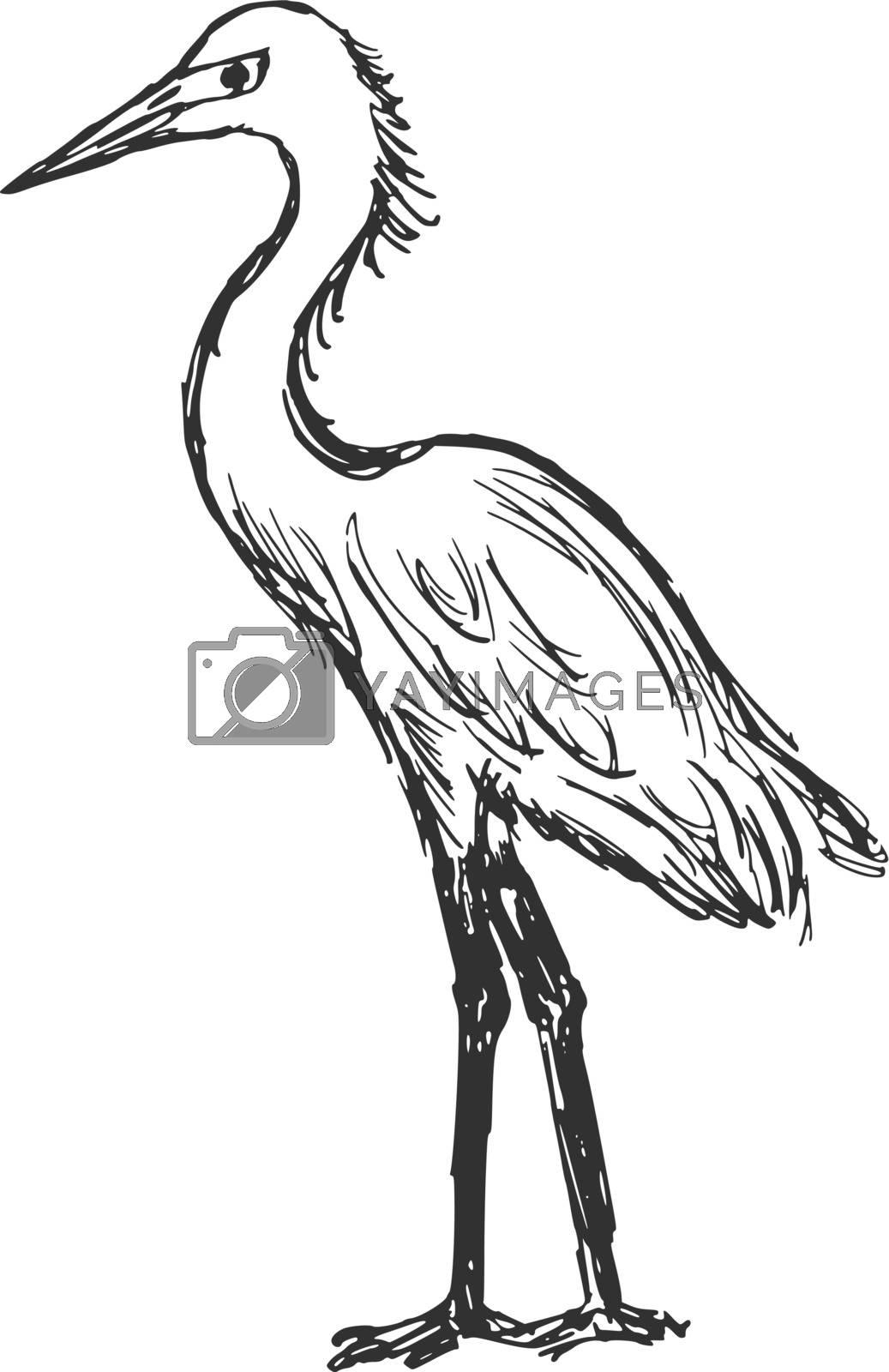 hand drawn, cartoon, sketch illustration of heron