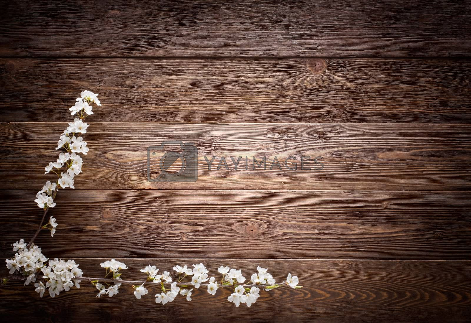 Royalty free image of Summer Flowers on wood texture background by primopiano
