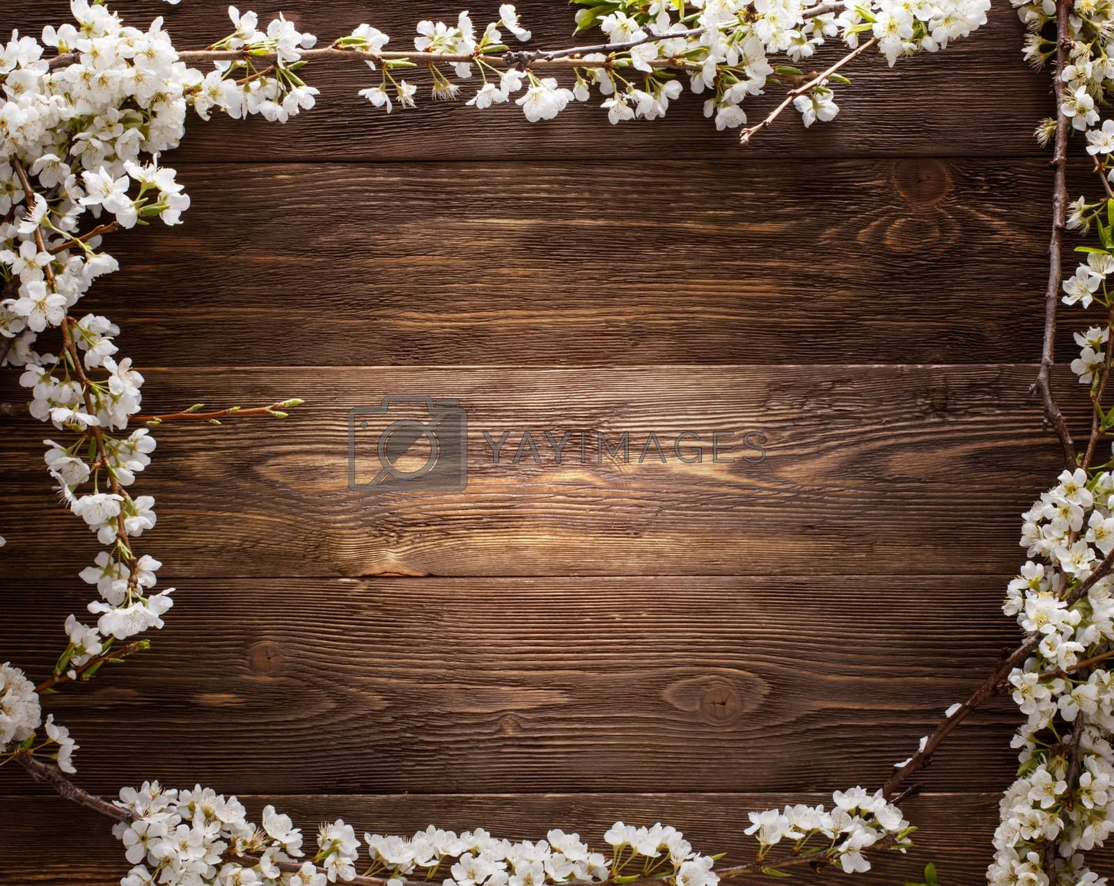 Royalty free image of Summer Flowers on wood texture background with copyspace by primopiano