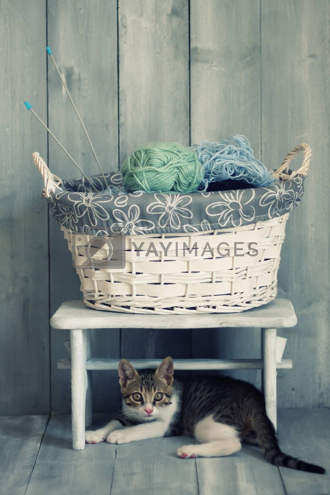 Photo of cute kitten and the basket with wool